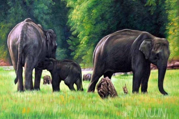 Buy Fine art painting Elephants and a cub by Artist Unknown Artist