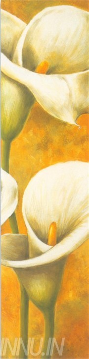 Buy Fine art painting White Callas 1 by Artist Unknown Artist