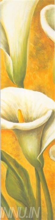 Buy Fine art painting White Callas 2 by Artist Unknown Artist