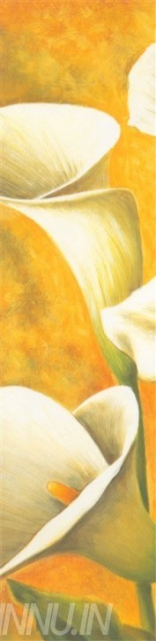Buy Fine art painting White Callas 3 by Artist Unknown Artist