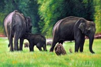 Fine art  - Elephants and a cub