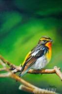 Fine art  - Solitude-II Sparrowby ArtistRajasekharan Parameswaran