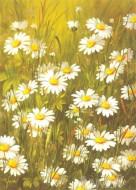Fine art  - Daisy Flowersby ArtistFasani