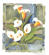 Fine art  - Calla Lily by Artist Franz Heigl