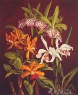 Fine art  - Orchid Trio 2 by ArtistRodolfo Jimenez
