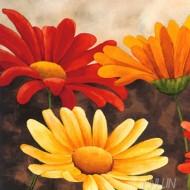 Fine art  - Cuadros De Margaritas De Colores by ArtistVen mas