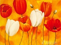 Fine art  - Festa Di Tulipani  by ArtistMaria Grazia Luffarelli