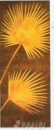 Fine art  - Tropical Palm Fronds by ArtistDavid Parks