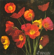 Fine art  - Poppy Bouquet 2  by Artist Jhon Seba