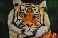 Fine art  - Tiger by Artist Suresh Dev