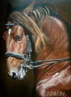 Fine art  - Horse by ArtistDinak Divakaran