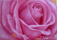Fine art  - Rose by Artist Dinak Divakaran