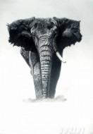 Fine art  - I AM Rogueby ArtistKrishna Chandran